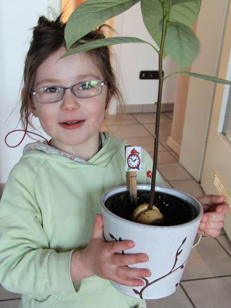 Mädchen hält Topf mit circa 40 Zentimeter hohem Avocado-Bäumchen in den Händen.