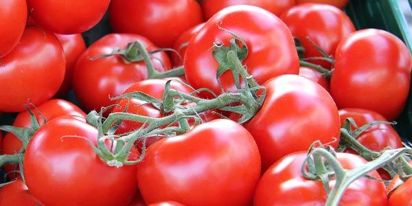 Tomaten säen | Tomaten ziehen  | Tomatenanbau