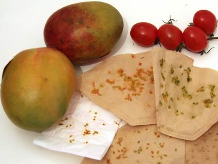 Hauptthema war heute Mango-Bäumchen selber zu ziehen. Die getrockneten Tomaten-Kerne für pflanzten sich fast von alleine.
