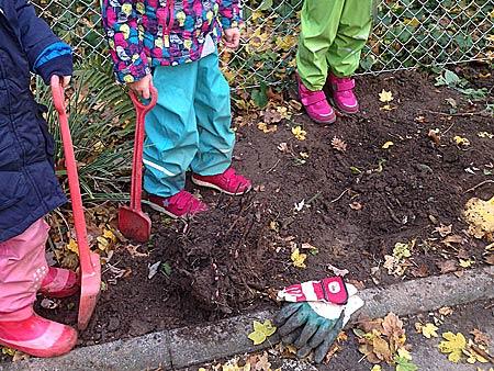 ...ein Loch ausheben und die Pfingstrosen einpflanzen.