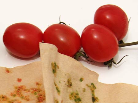 Cocktailtomaten und Kaffeefilterpapier mit getrockneten Tomaten-Kernen