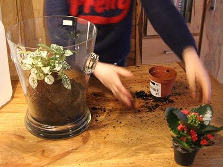 Kinderhände plflangreifen nach Zimmerpflanze